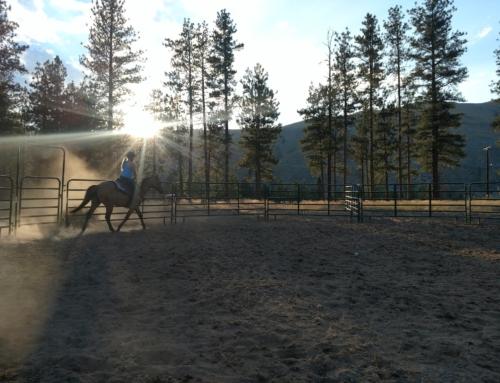 """Horses (aka, """"Hard Work"""")"""
